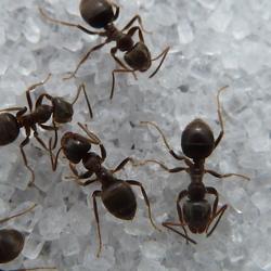 Mieren in Luilekkerland