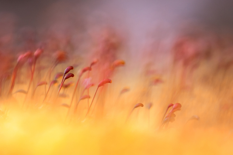 """Kleur - Een beetje kleur om deze grijze zondag op te fleuren.<br /> Meer kleurige macro zien?   <a href=""""http://belton-loes.blogspot.com/2016/01/macr"""