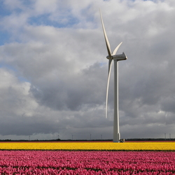 Wind, zon, windmolen en tulpen...welkom in Flevoland