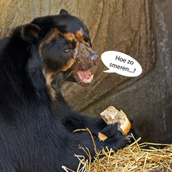 Ik zag een beer..
