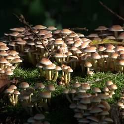 Kleine paddenstoelen op een boomstam