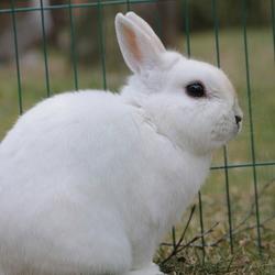 Dit is Noah, het konijn van Maes.