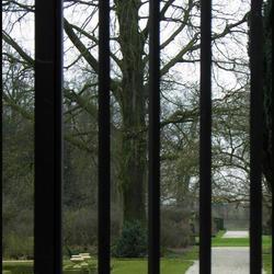 Hek voor kasteeltuin Middachten bij Ellecom