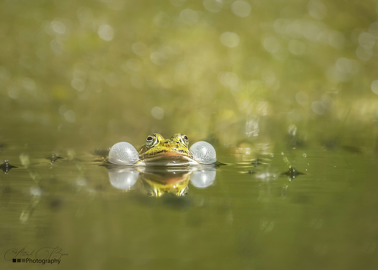 Frog -