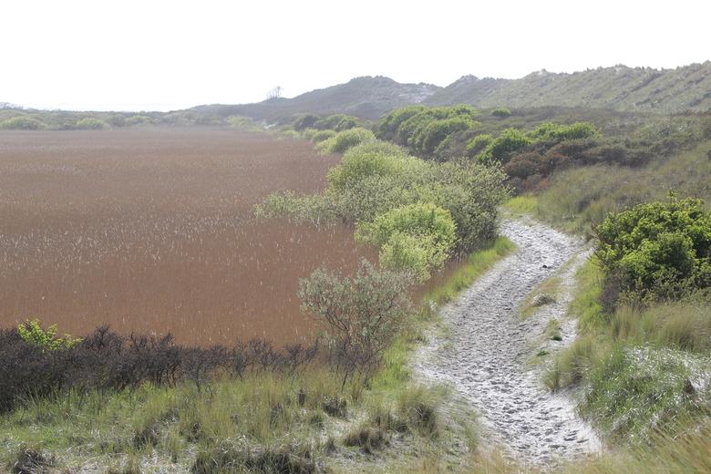 achter de duinen op ameland - een prachtig landschap achter de duinen van ameland.