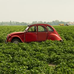 eend in aardappelveld