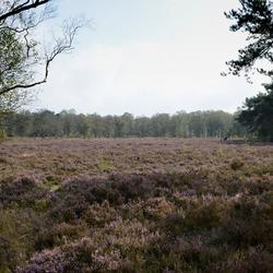 veluwe-heide en bos 2