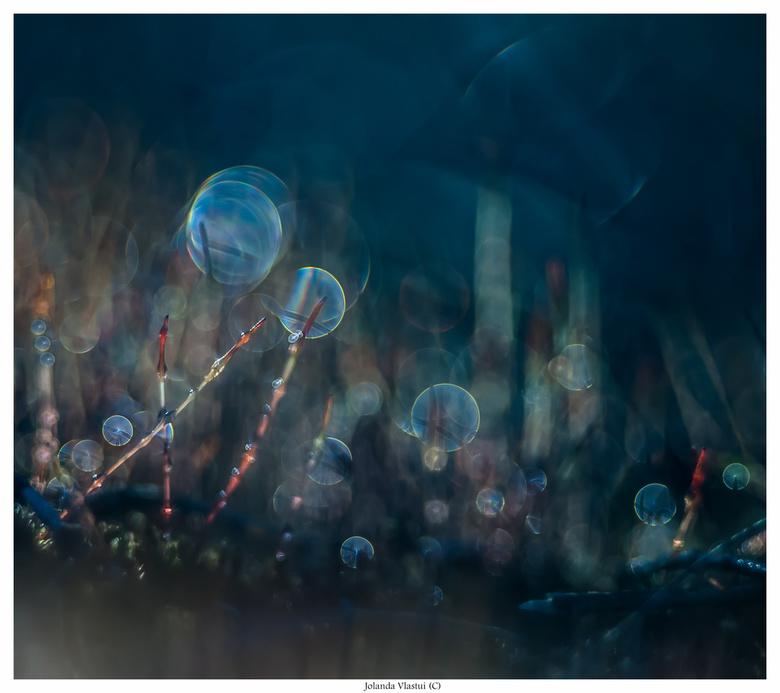 Bedauwde haarmosjes - Haarmos in tegenlicht.<br /> Gefotografeerd met een analoge MeyerTrioplan 100 mm. 2.8 met tussenringen.<br />