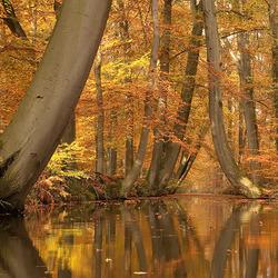 Gouden herfst