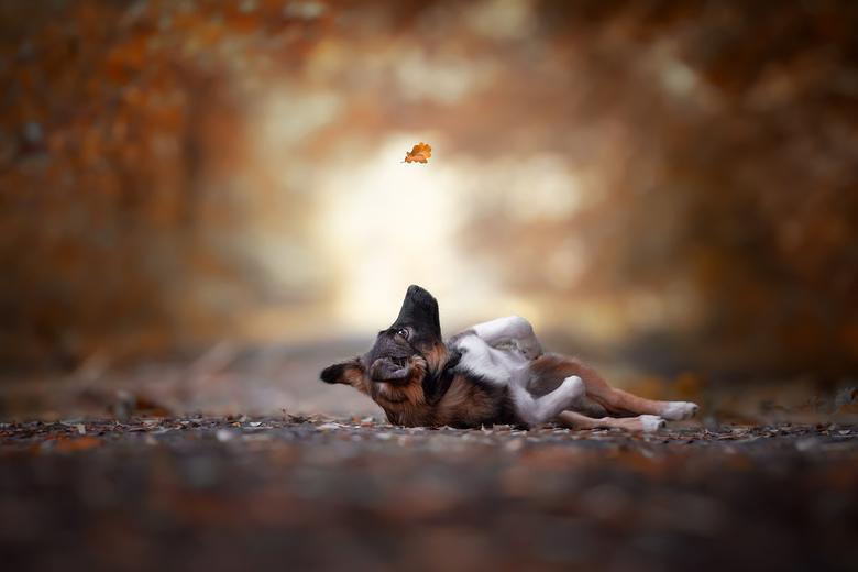 herfst.... -