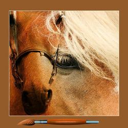 een paard..........................