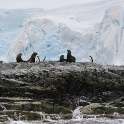 Antarctica, Melchior Island