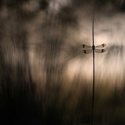 Caught in first light