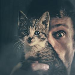 The Catnapper