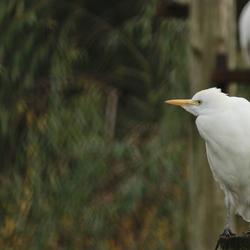 Kent iemand deze vogel?