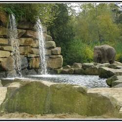 Olifant en watervallen