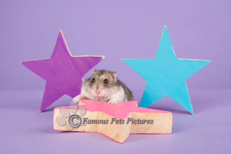 """Simba 'Little star' - Pasgeleden had ik twee kleine modelletjes in de studio. <br /> <br /> Allebei erg nieuwsgierig en snel <img  src=""""/images/smil"""
