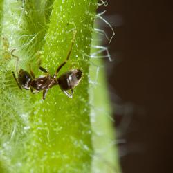 Mier op een plantje