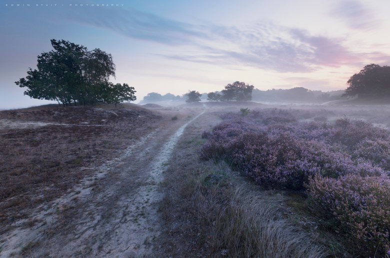 Path to Dawn - Drunense duinen net voor zonsopkomst