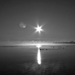 Morning-ZW.jpg