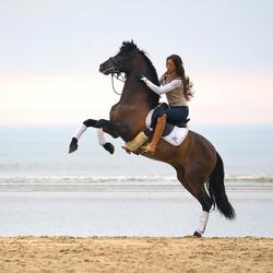 paard steigeren