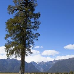 Nieuw - Zeeland 177