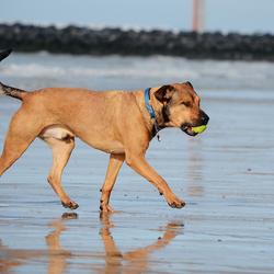 Nolan @ the beach (Oostende)
