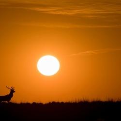 Walk to the sun.