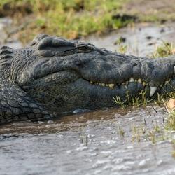Botswana 16