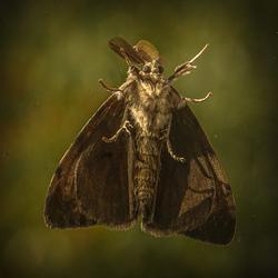 Vlinder...