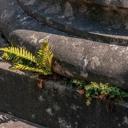 varen en ander plantje wat groeit op de voet van een pilaar
