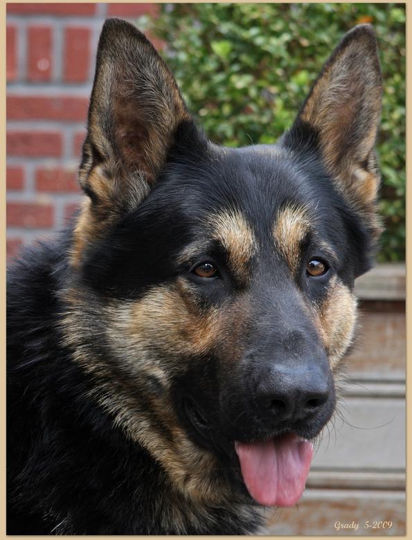 mijn vriendje Max - De hond van mijn nichtje en haar man, eerste ontmoeting en gelijk vriendjes, wat een schat van een hond.<br /> Groetjes Gra fijn