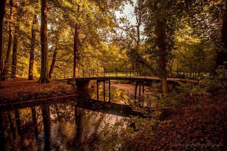 Herfst in s'graveland. -