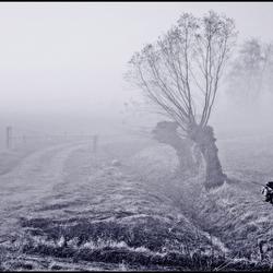 a foggy winterday ..