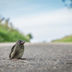 Jong vogeltje