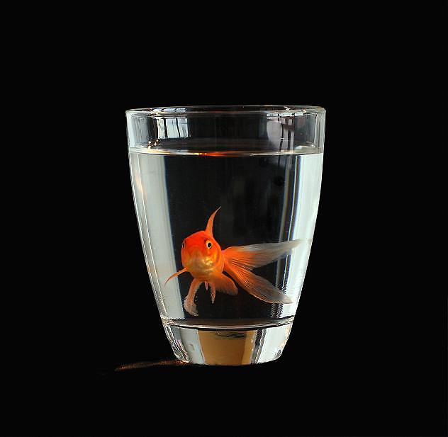 Cup a Fish! -