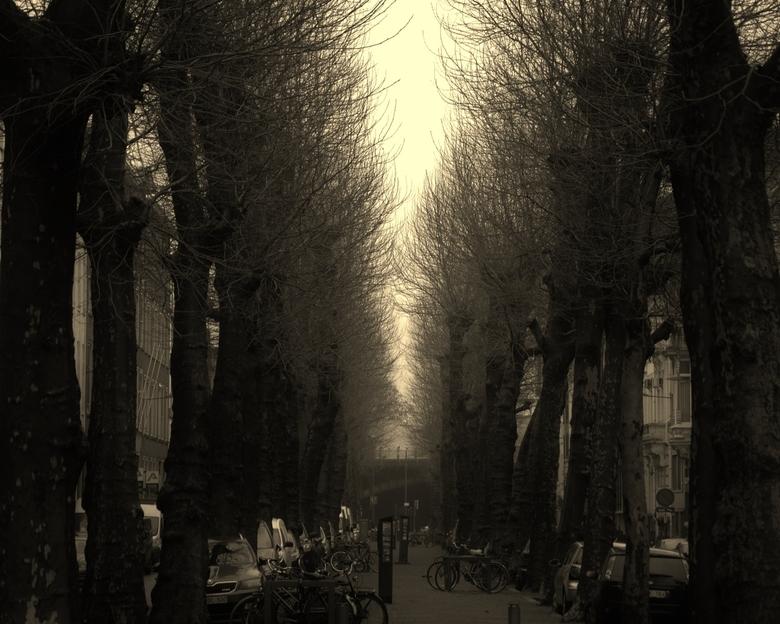Street antwerp city -
