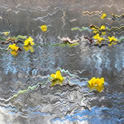 Daffodil on ice