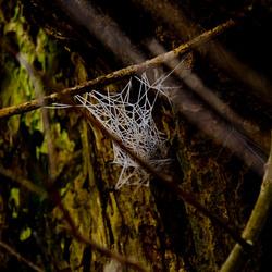 rijp op spinnenweb