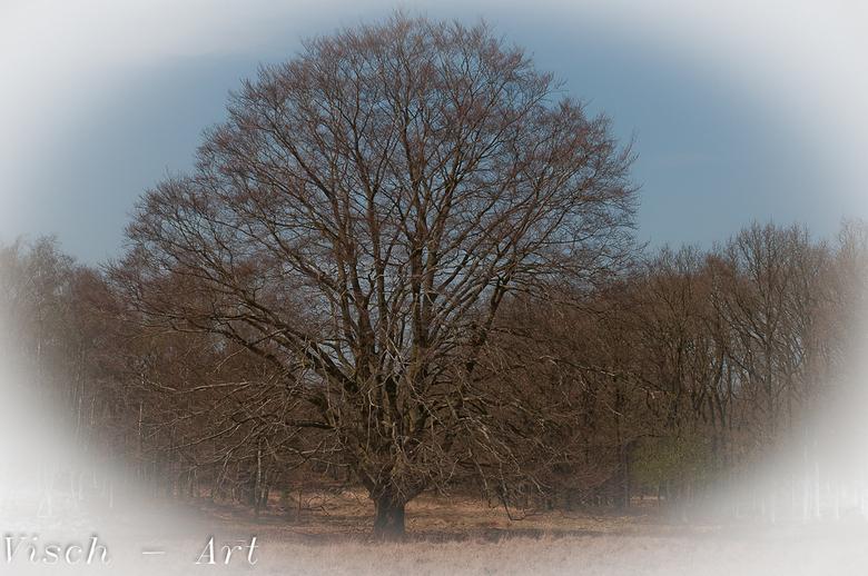 Aardhuis Majestueuze boom - Deze boom staat naast de Aardhuisweg op een mooi veld. Bomen zoals bomen horen te zijn.<br /> De kadering is weer een pro