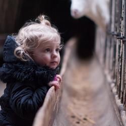 Naar de geitenboerderij