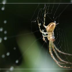 nog een natte spin
