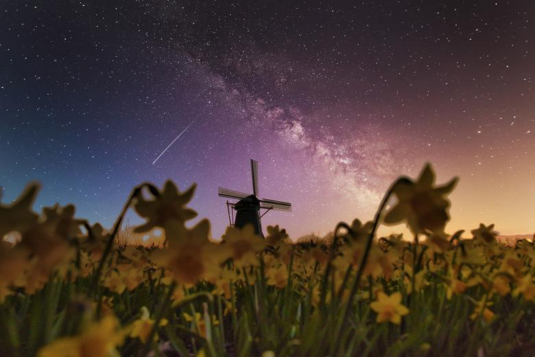 Narcissen  - Deze foto is gemaakt met zonsopkomst. Normaal gesproken is het op deze locatie onmogelijk om zo'n foto te maken vanwege het vele val