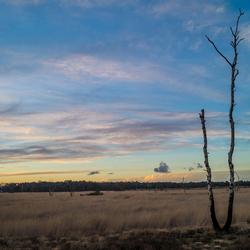 Magisch uitzicht bij Kalmthoutse Heide
