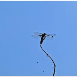 vliegeren