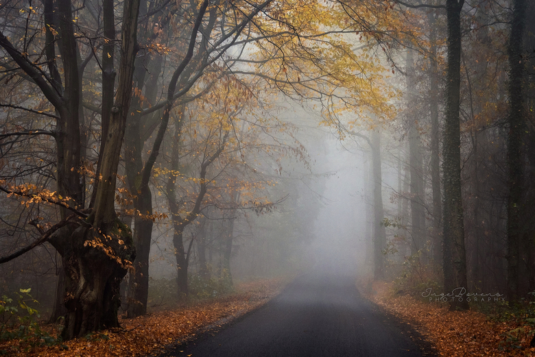 Autumn's Last Breath. - De herfst is bijna ten einde... Het was een bijzonder mooi seizoen dit jaar.