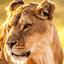 leeuwin