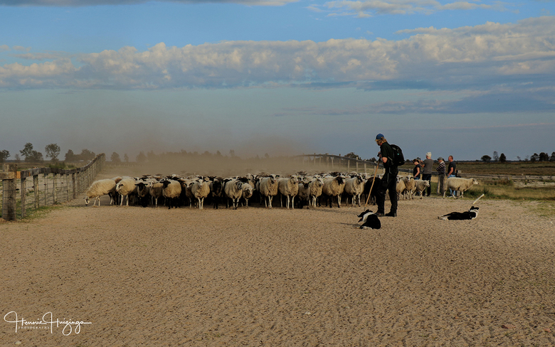 Herder met zijn schapen - Herder met zijn schapen