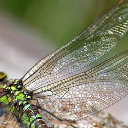 Dragonfly...............
