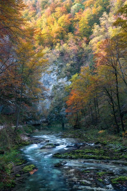 Slovenië in de herfst - De prachtige Vintgar kloof in Slovenië gevuld met herfst kleuren.